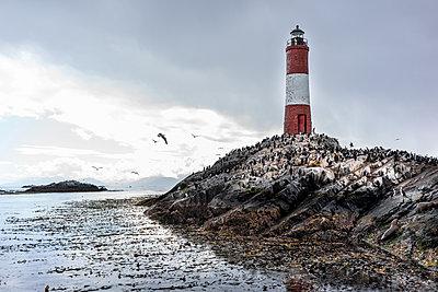 Leuchtturm und Robben - p741m2065651 von Christof Mattes