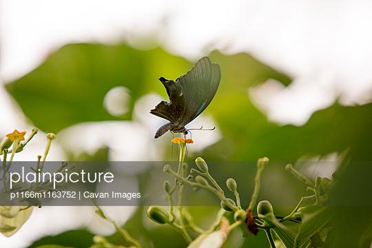 p1166m1163752 von Cavan Images