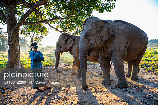 standing next to elephant's at animal sanctuary in the golden triangle - p1166m2269714 by Cavan Images