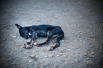 Little dog - p1007m886910 by Tilby Vattard
