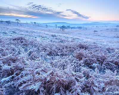 Heavy frost on bracken and a slight mist on the heathland of Woodbury Common, near Exmouth, Devon, England, United Kingdom - p871m2075407 by Baxter Bradford