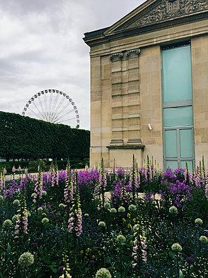 Jardin des Tuileries - p988m1153074 von Rachel Rebibo