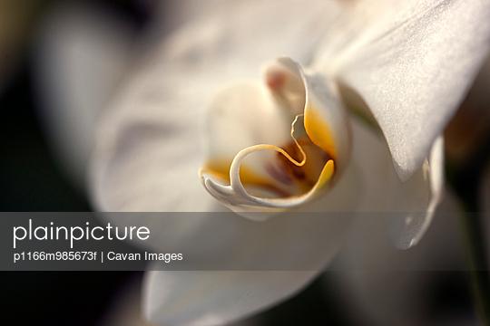p1166m985673f von Cavan Images