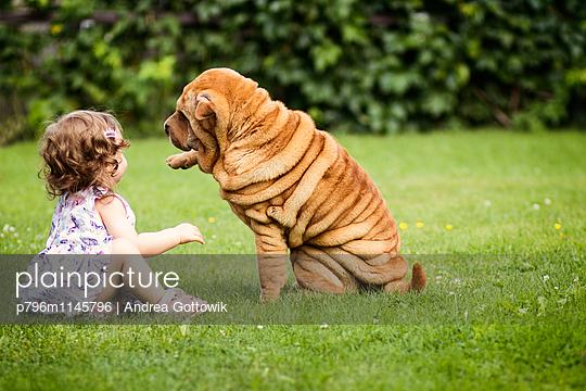 Faltenhund - p796m1145796 von Andrea Gottowik