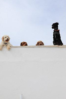 Watchdogs - p0452325 by Jasmin Sander