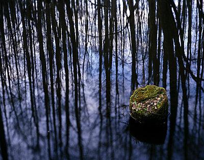 Sumpfwald - p1016m792644 von Jochen Knobloch