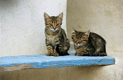 Two cats in Greece - p3300472 by Harald Braun