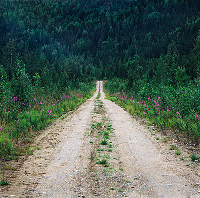 Straight Dirt Road In Forest Along With Grass, nortehrn Sweden  - p847m1529409 by Mikael Andersson