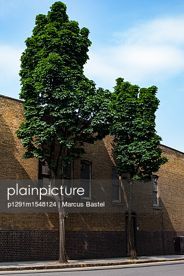 Two Trees And Brick Building - p1291m1548124 by Marcus Bastel