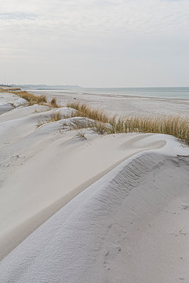 Germany, Mecklenburg-Western Pomerania, Darss, Baltic Sea, West beach, dune - p300m2079168 by Anke Scheibe