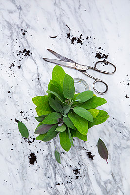 Sage, soil and and scissors on white marble - p300m949946f by Larissa Veronesi