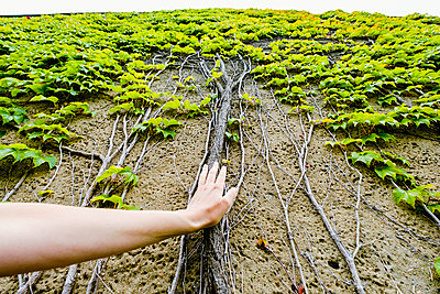 Personal perspective woman touching ivy roots growing up wall - p301m2075558 by Sven Hagolani