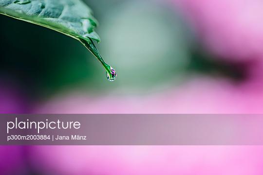 Raindrop on Hydrangea leaf - p300m2003884 von Jana Mänz