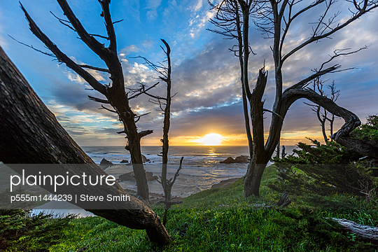 Trees on hill near ocean at sunset - p555m1444239 by Steve Smith
