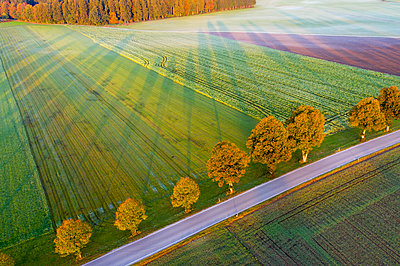 Germany, Bavaria, tree-lined country road near Dietramszell at sunrise, drone view - p300m2081291 by Martin Siepmann