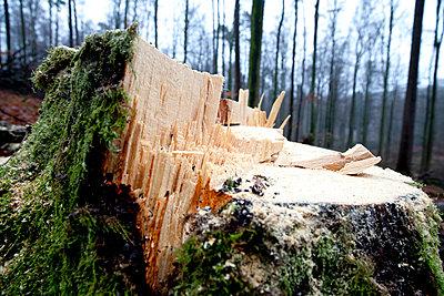 Beech forest - p979m909841 by Dott
