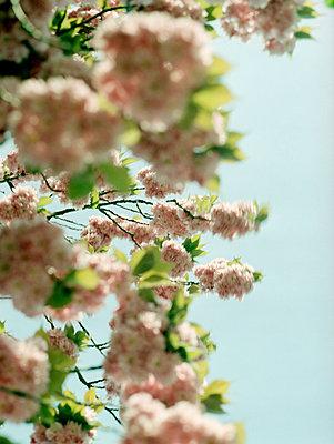 Frühling - p989m741672 von Gine Seitz