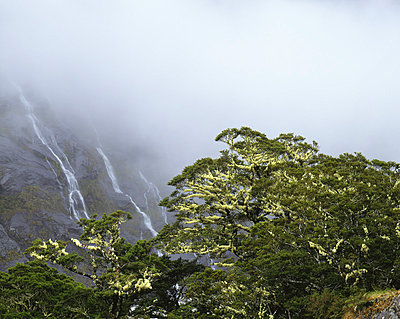 Regenwald in Neuseeland - p1016m792593 von Jochen Knobloch