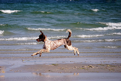 Beach for dogs - p162m1093887 by Beate Bussenius