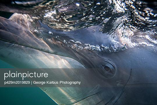 p429m2019829 von George Karbus Photography