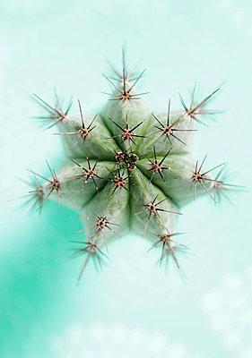 Cactus - p5700068 by Elke Röbken