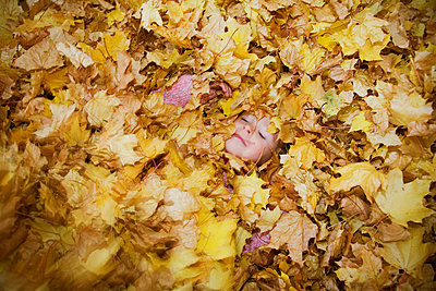 Girl Covered in a Pile of Autumn Leaves - p6940260 by Andrew Geiger