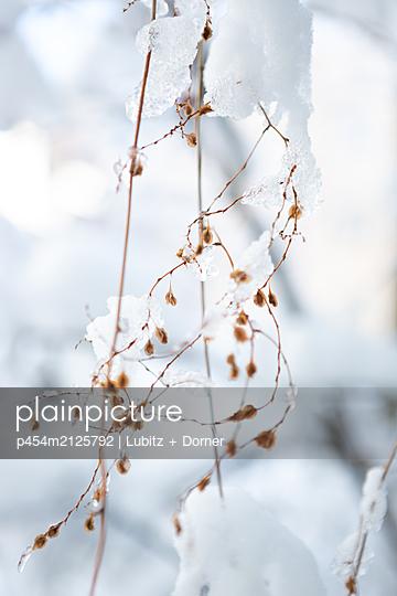 Winter nature - p454m2125792 by Lubitz + Dorner