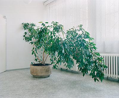 Grünpflanze in einem Büro - p1320m1222069 von Matija Brumen