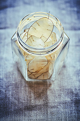 Lunaria leaves in preserving jar - p968m2020195 by roberto pastrovicchio