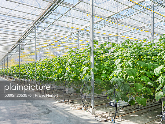 Greenhouse for the artificial and self-sufficient cultivation of vegetables - p390m2053570 by Frank Herfort