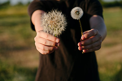 Big and Small Dandelions - p1262m1444504 by Maryanne Gobble