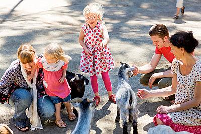 Family feeding goats at zoo - p31227410f by Ulf Huett Nilsson
