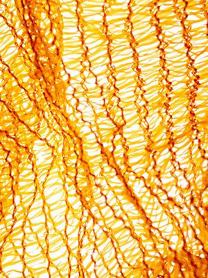 Potatoe net - p401m2260872 by Frank Baquet