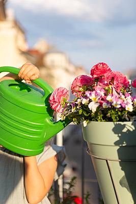 Balkonblumen gießen - p454m2184647 von Lubitz + Dorner