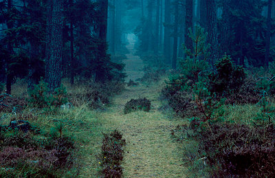 A road through a wood - p575m1074800f by Dick Clevestam