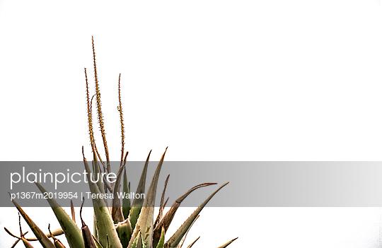 Pflanze - p1367m2019954 von Teresa Walton