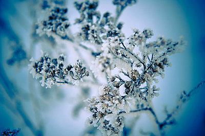 zweig im winter - p627m671446 by Ellen R¸ger
