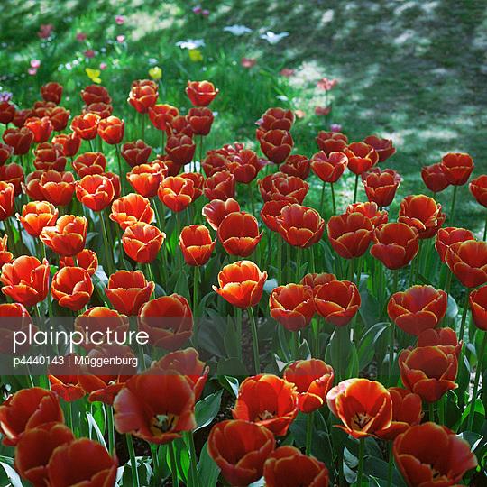 Flowerbed - p4440143 by Müggenburg