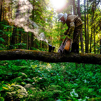 Beekeeper with bee smoker in forest, Ural, Bashkortostan, Russia - p429m2069209 by Aliyev Alexei Sergeevich
