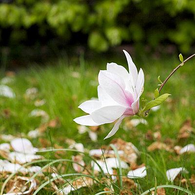 Frühling - p6060566 von Iris Friedrich