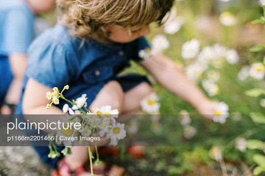 Little girl picking wild daisies on a hot and humid summer day - p1166m2201466 by Cavan Images