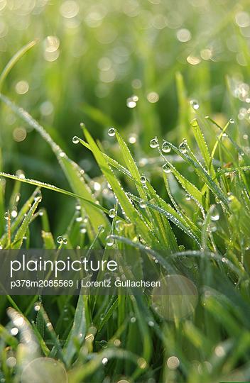 morning dew portrait - p378m2085569 by Lorentz Gullachsen