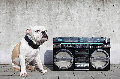 Englische Bulldogge mit Ghettoblaster - p0452920 von Jasmin Sander