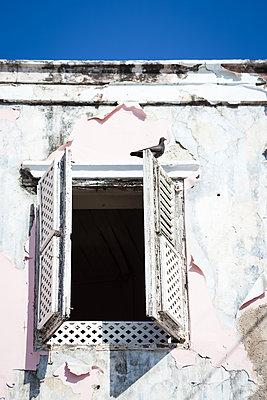Taube sitzt auf Fensterladen - p045m1573787 von Jasmin Sander