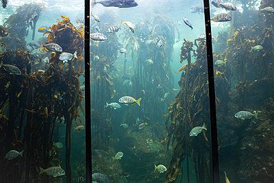 Two Oceans Aquarium, biodiversity - p1640m2246216 by Holly & John