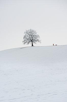 Schlitten fahren - p954m1214493 von Heidi Mayer