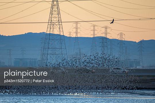 p343m1520772 von Peter Essick