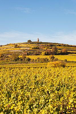 Germany,Rhineland-Palatinate, Pfalz, German Wine Route, Flaggenturm on Fuchsmantel hill and vineyards in autumn colours - p300m2042024 by Gaby Wojciech