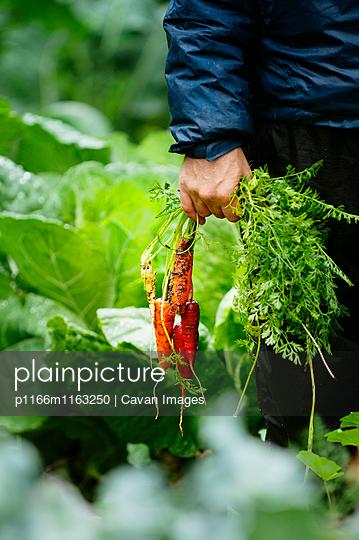 p1166m1163250 von Cavan Images