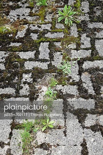 Weed - p237m702111 by Thordis Rüggeberg